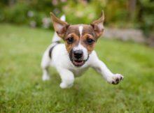 Health for Pet: A segurança total do seu animal de estimação