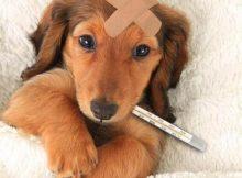 Mundo pet: Quais as doenças mais comuns em cachorros