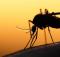 Principais Dúvidas sobre Febre Amarela | Preço de Convênio Médico