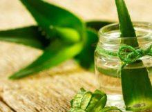Para Que Serve Aloe Vera | Preço de Convênio Médico